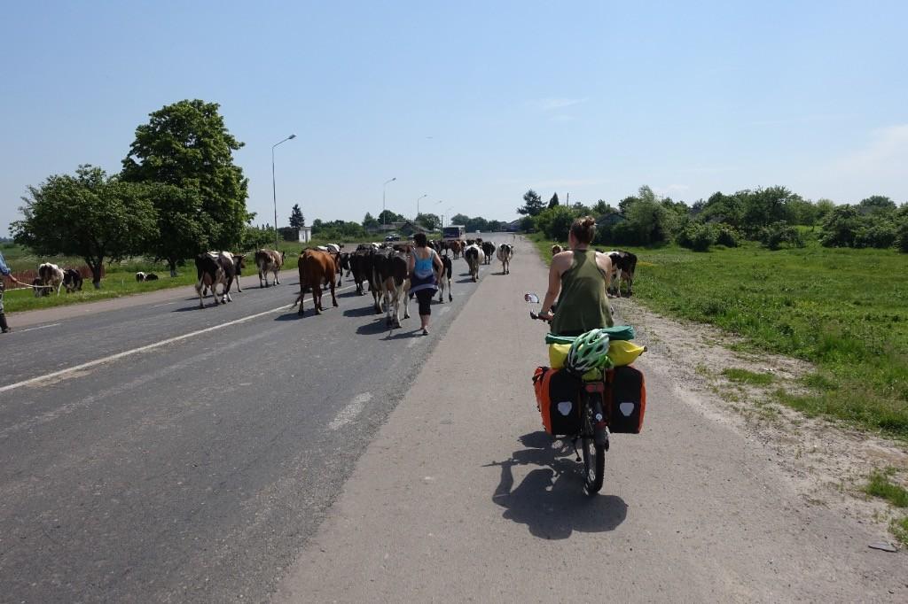 Achtung Kühe