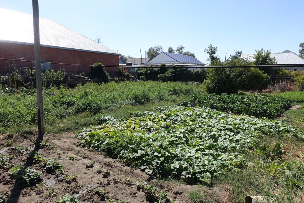 der riesige Garten von Ruslan's Familie