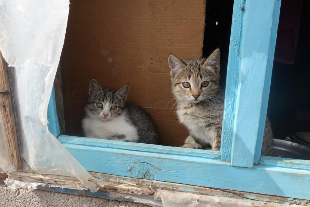 zwei der tollen kleinen Miezis :-)