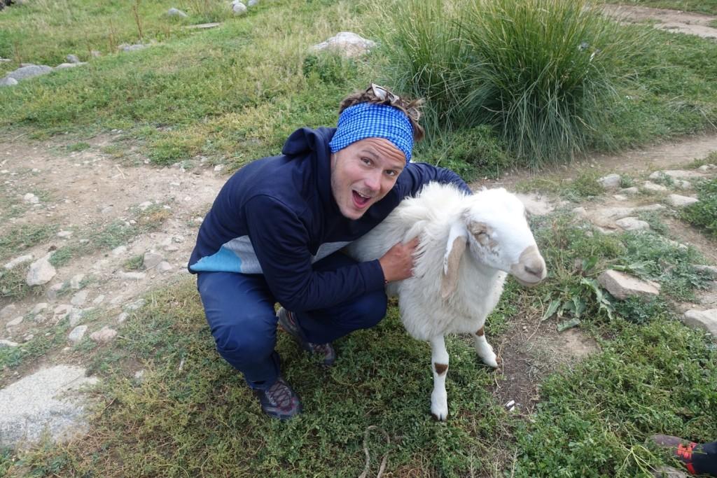 das verrückteste Schaf der Welt - aber so sympathisch :-)