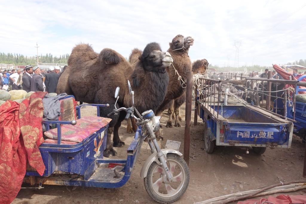Kamele sind trotzdem cool...