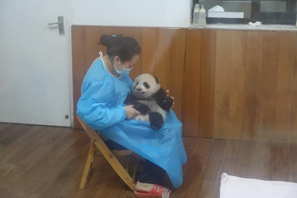 der Kleinkind-Panda wird gefüttert :-)