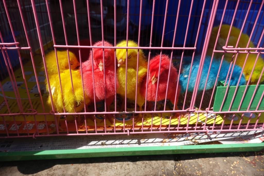 gefärbte Vögel