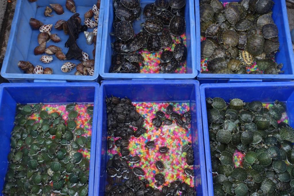 Schildkröten in allen Größen und Farben