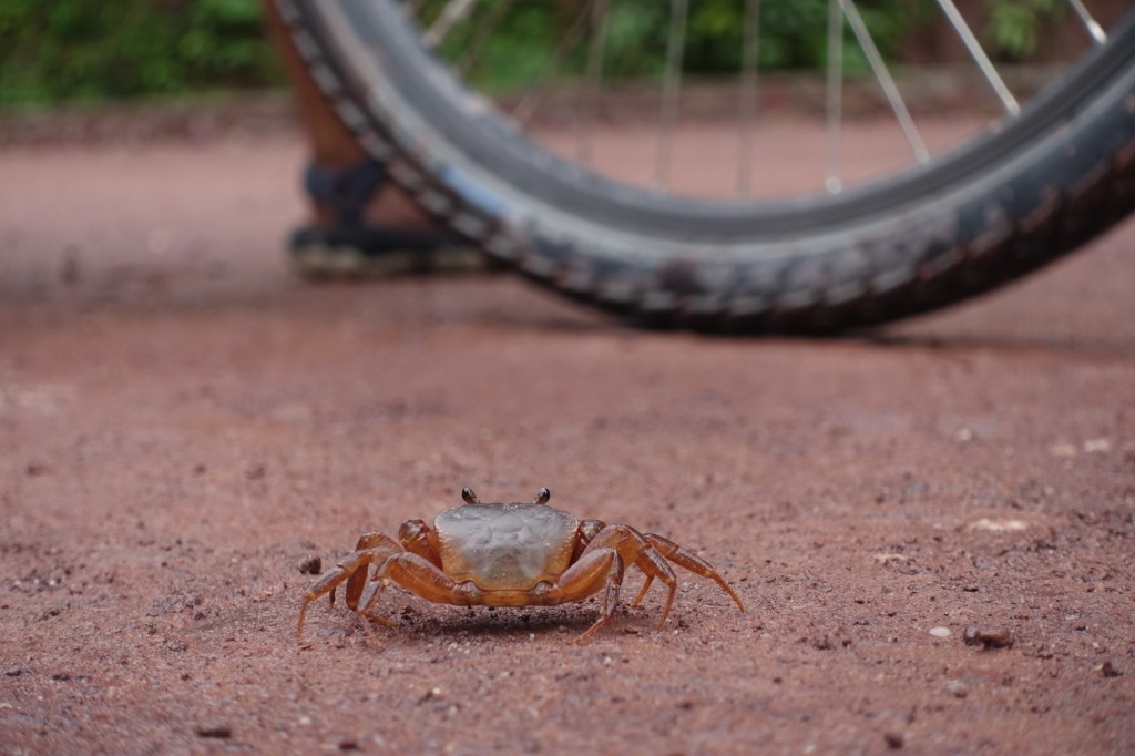 a crab, right in the middle of the road