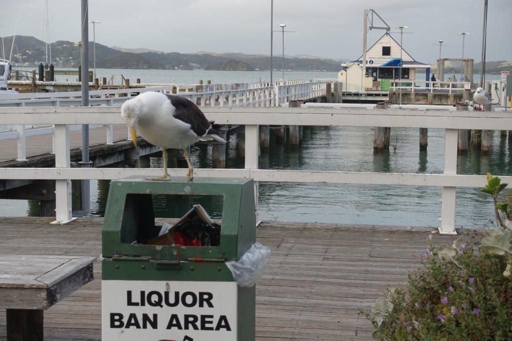 fat seagull